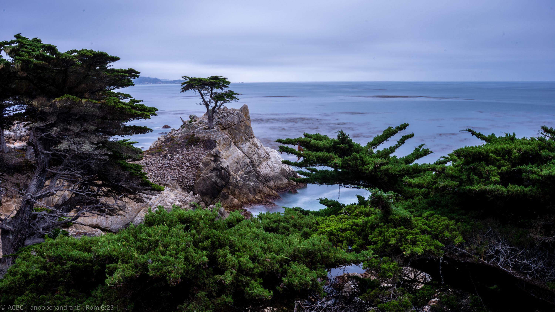 Lone-cypress-tree-1